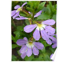 Fan flower Poster