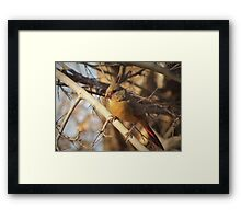 Desert Cardinal~ Pyrrhuloxia (Female)  Framed Print