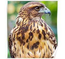128 eagle Poster