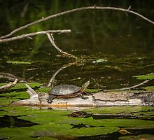 Pond Life by Thomas Young