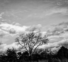 Black and White Tree by Roses1973