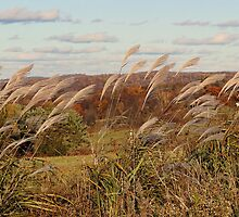 Grasses in the wind by vigor