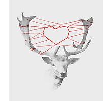 Lovely Deerie Photographic Print