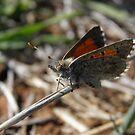 Wildlife of South Australia by Dan & Emma Monceaux
