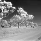 Country road infrared by Syd Winer