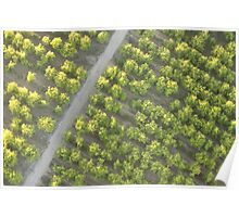 Orchards, Birds Eye View  Poster