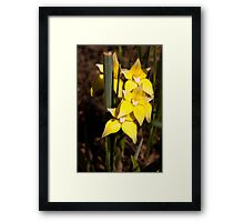 Cowslip Orchids Gathercole Reserve Framed Print