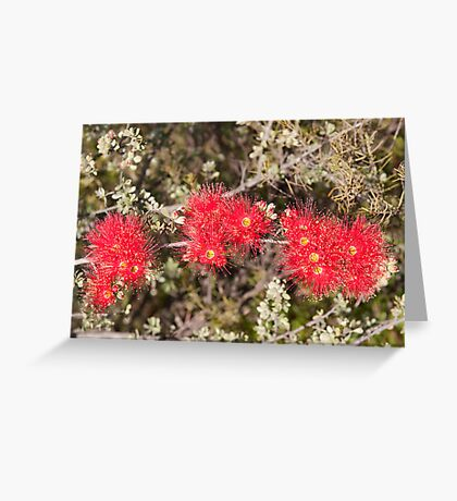 Kunzea Pulchella (Granite) Gathercole Reserve Greeting Card