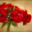 full bloom by Teresa Pople