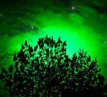 Green Pine Sun Stars by Roses1973