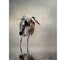Heron in Mist Photographic Print