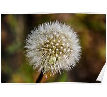 Flower in Autumn Poster