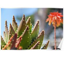 Green cactus plant photograph Poster