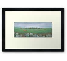 Tresco Cows Framed Print