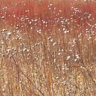 Winter on the Marsh by lorilee