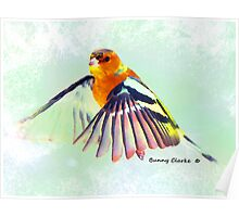 Chaffinch Study Poster