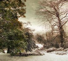 November Snow by Jessica Jenney