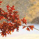Falling Snow by lorilee