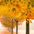 Fogged-In Maples by Beth Mason