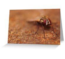 Tsetse Fly Posing  Greeting Card