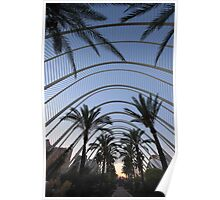 Palm trees in Valencia Poster