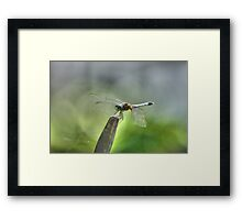 The Wonderful Dragonfly, Macro Nature Photograph Framed Print