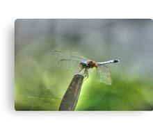 The Wonderful Dragonfly, Macro Nature Photograph Canvas Print