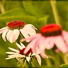 A Presentation Of Cone Flowers by Thomas Young