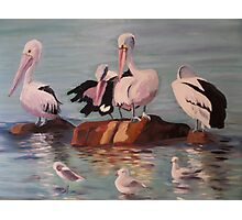 Pelicans and Seagulls at the Beach Photographic Print