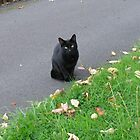 Piercing Eyes - October Kitty by MidnightMelody