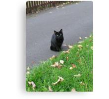 Piercing Eyes - October Kitty Canvas Print