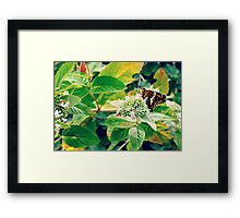 Stop for a rest on a tiny leaf Framed Print