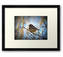 House Finch (Female) Framed Print
