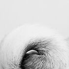 Pug Tail by Stephanie Sherman
