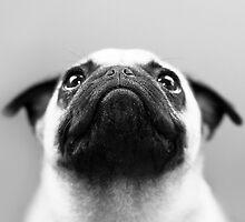 Pug Black and White by Stephanie Sherman