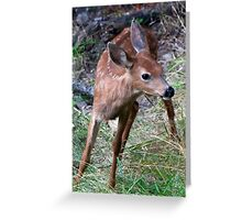 Baby Bambi....is Ready to Cut and Run Greeting Card