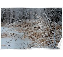 Frost Laden Grasses Poster