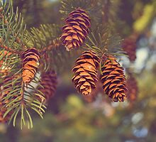 Pine Cones by afeimages