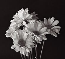 Bunch Of Daisy's by Jeffrey  Sinnock
