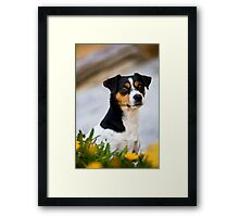 Foxy Dog *PROCEEDS TO CHARITY* Framed Print