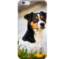 Foxy Dog *PROCEEDS TO CHARITY* iPhone Case/Skin