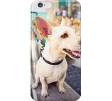 Chihuahua From Pound To Paradise *PROCEEDS TO CHARITY* iPhone Case/Skin