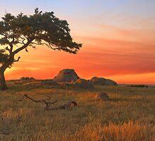 SUNSET AT DOG ROCKS by Matthew Burniston