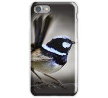 Superb Blue Fairy Wren iPhone Case/Skin
