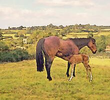 Mare and Foal in Twyford by Barry Thomas