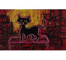 Le chat noir s'amuse Photographic Print