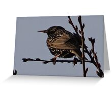 Cute spotted woodpecker Greeting Card