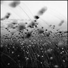 Grasses in the breeze 1 by BeninFreo