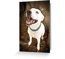 Staffy Under Tree *PROCEEDS TO CHARITY* Greeting Card