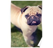 Cheeky Pug *PROCEEDS TO CHARITY* Poster